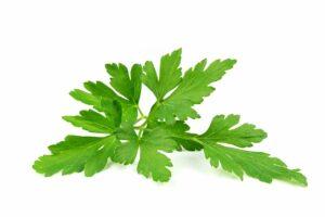parsley leaves, leaf, parsley common