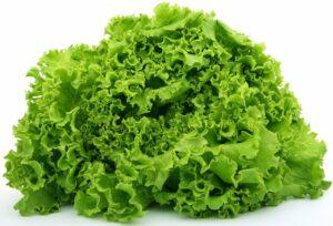 lettuce, food, fresh